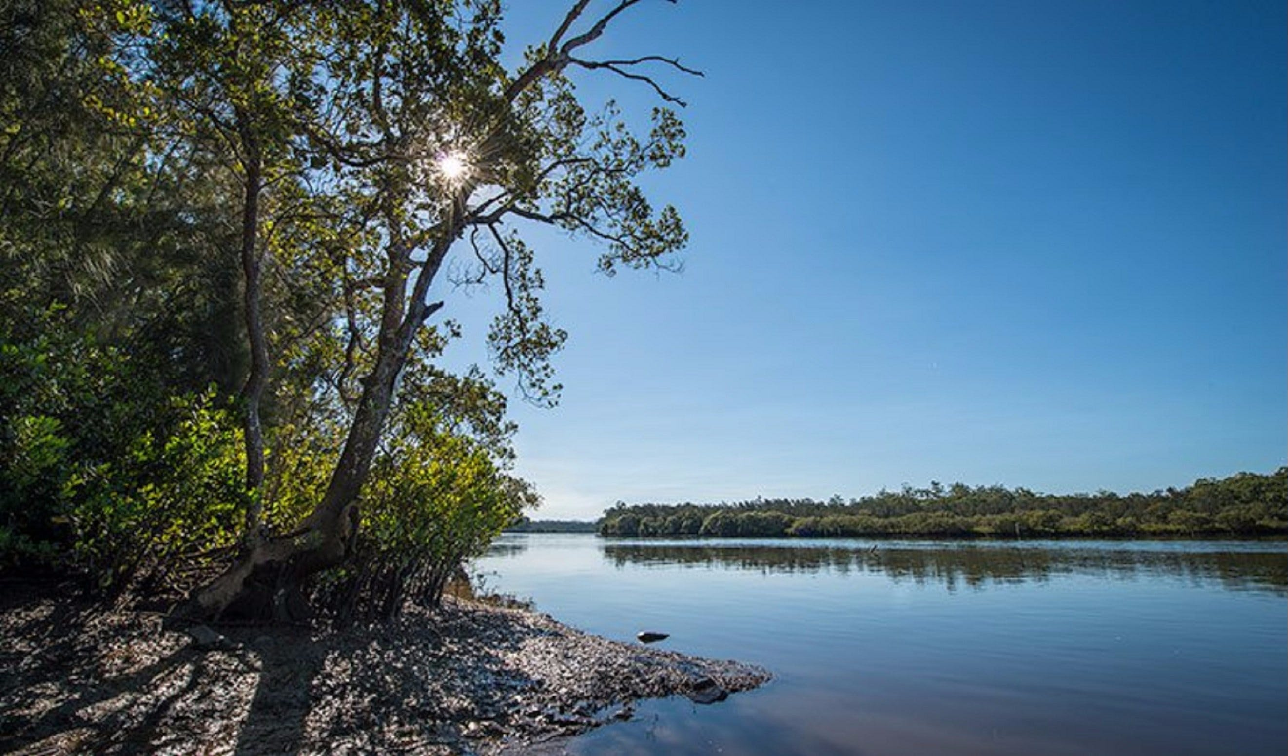 Karuah River National Park and Nature Reserve - Attractions Brisbane