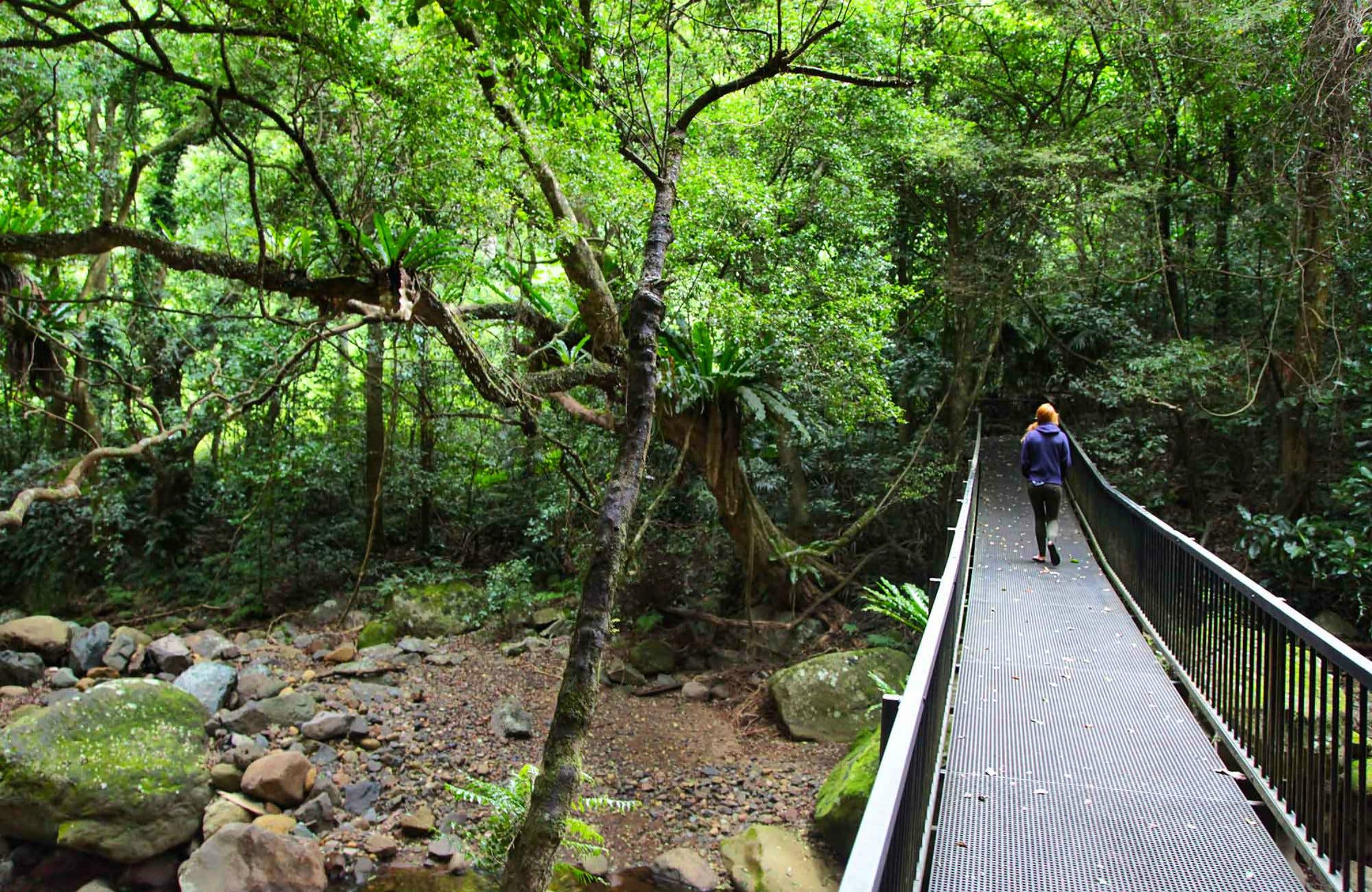 Rainforest Loop Walk Budderoo National Park - Attractions Brisbane