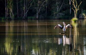 Seaham Swamp Nature Reserve - Attractions Brisbane