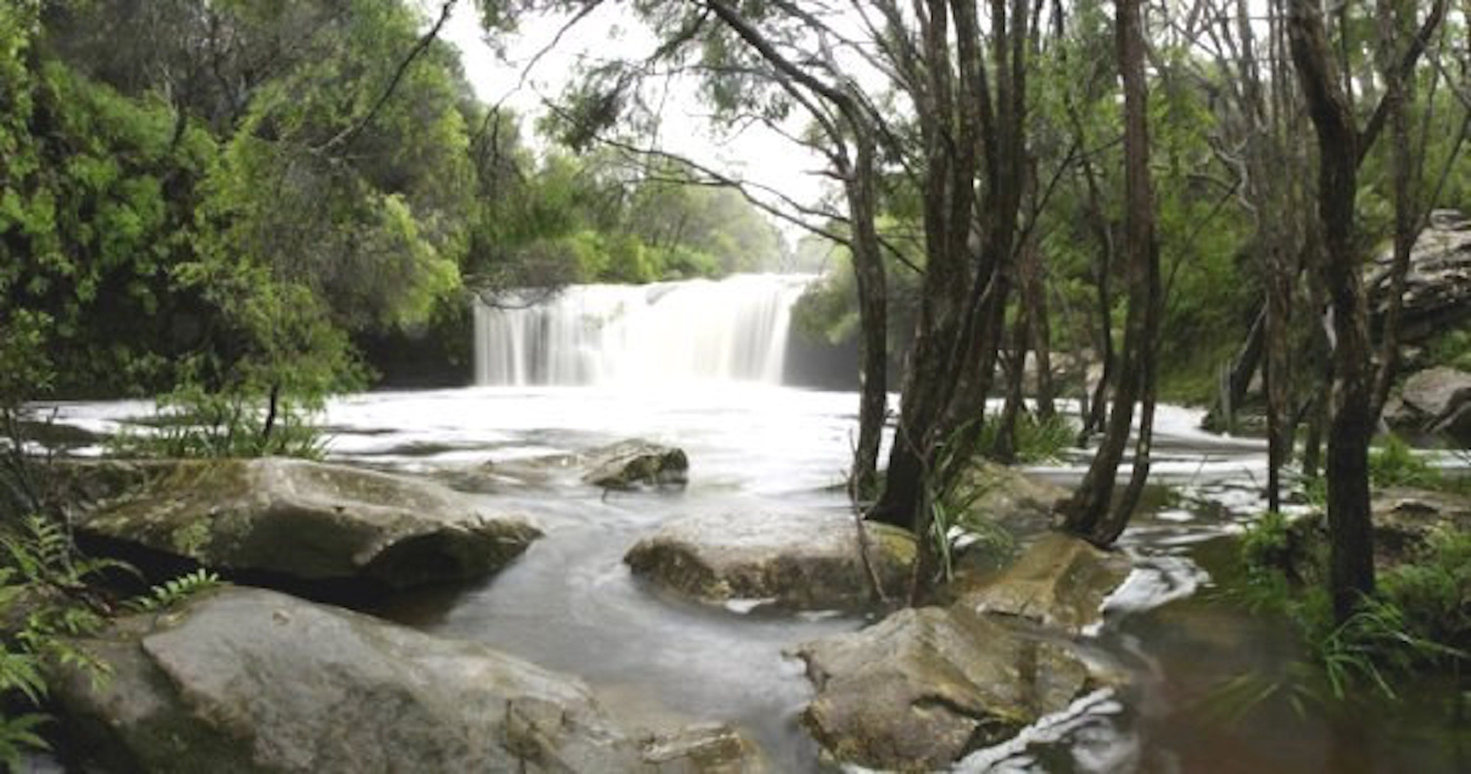 Nellies Glen Carrington Falls - Attractions Brisbane