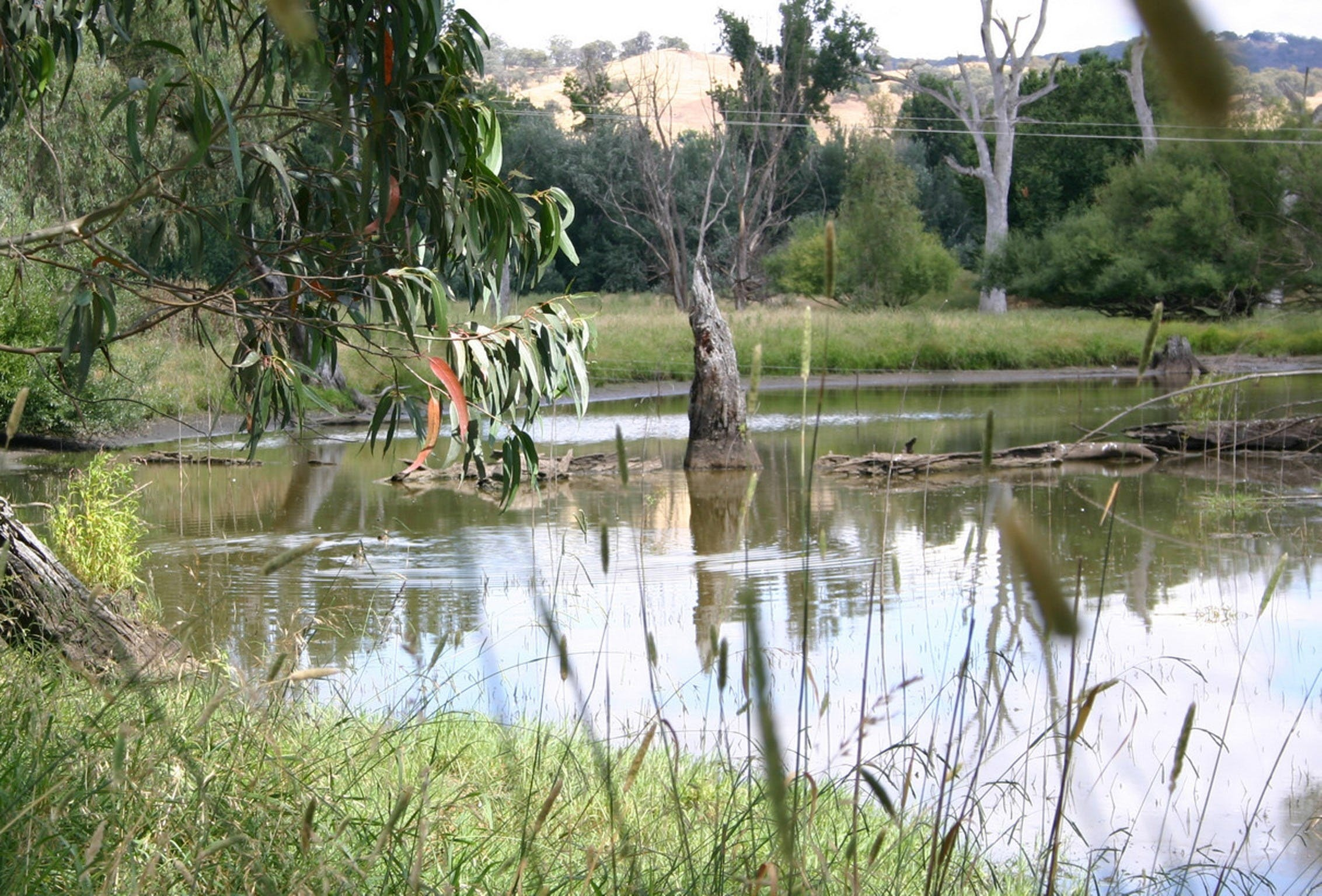 Tumut Wetlands - Attractions Brisbane