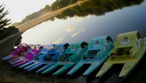 Terrigal Paddle Boats and Stand Up Paddle Boards - Attractions Brisbane