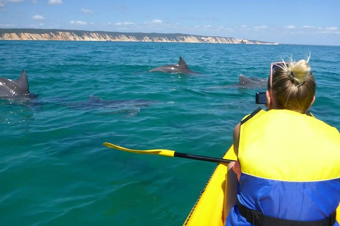 Kayak with Dolphins and 4WD Great Beach Drive Day Trip from Noosa - Attractions Brisbane