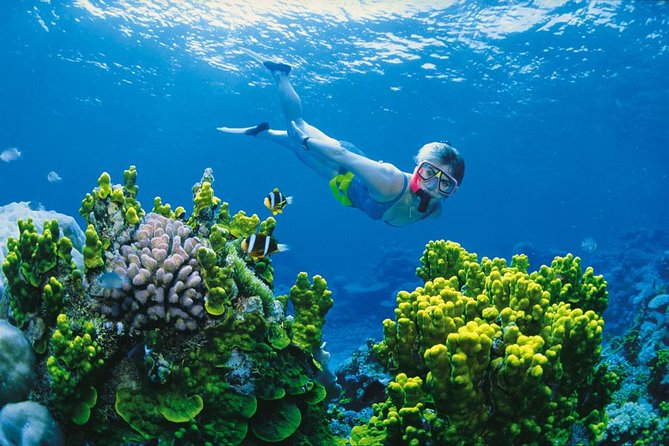 Full Day Snorkel In The Great Barrier Reef - Attractions Brisbane