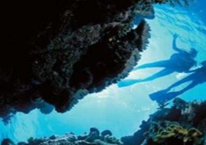 Deep Sea Divers Den - Attractions Brisbane