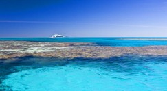 Reef Jet Cruises - Attractions Brisbane