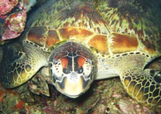 Adrenalin Snorkel and Dive - Attractions Brisbane